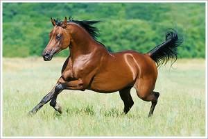 600x400fin_pferd_springt_auf_weide